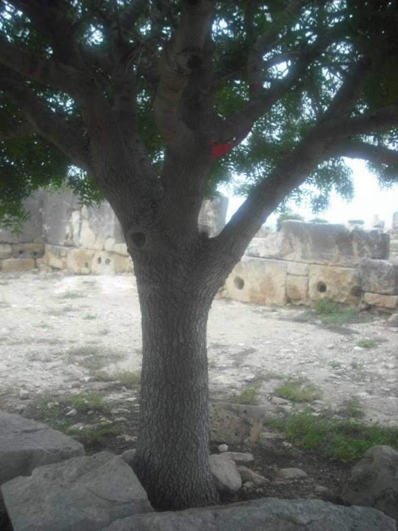 Palaipaphos shrine